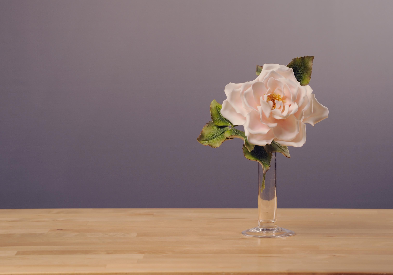 rosemood_cakepirate_12_2011